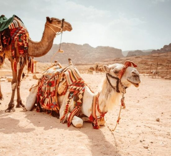 Viaggio organizzato in Giordania nel deserto del Wadi Rum su dromedari