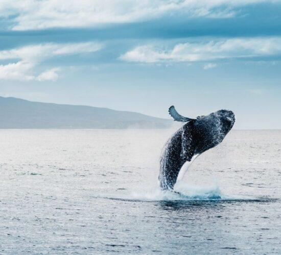 Tour in Islanda alla scoperta delle balene le meraviglie dei mari del nord