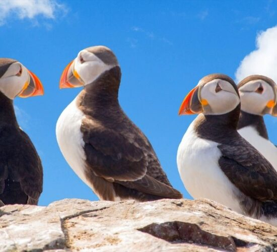 Viaggio organizzato in Islanda alla scoperta degli animali più bizzarri dell'isola