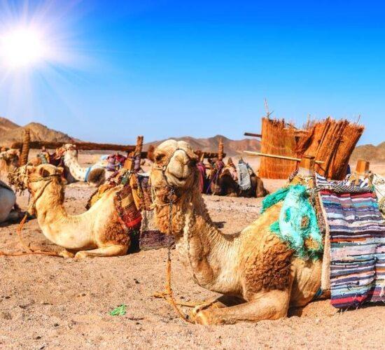 Viaggio organizzato a Lanzarote alle Canarie - I simpatici dromedari dell'Africa